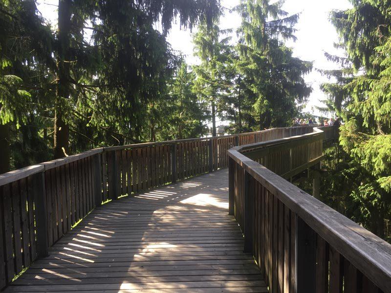 Waldwipfelweg Sankt Englmar