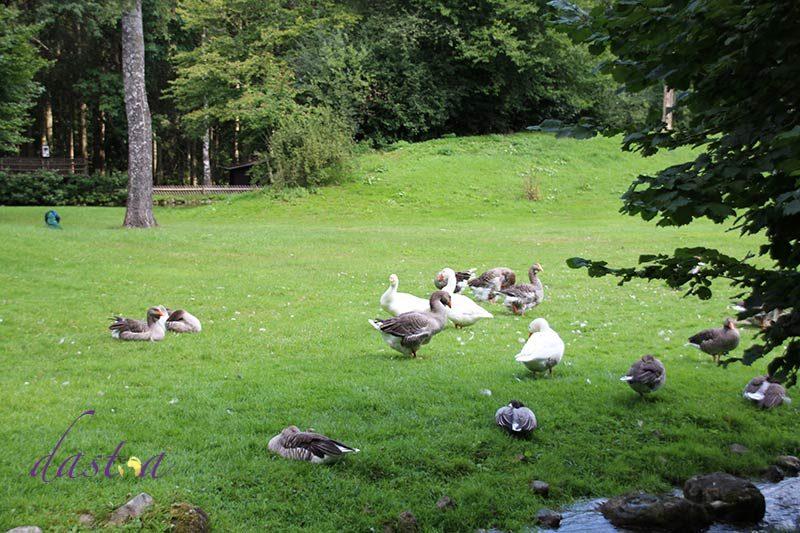 Wildpark Poing - Ausflugsziel mit Kindern