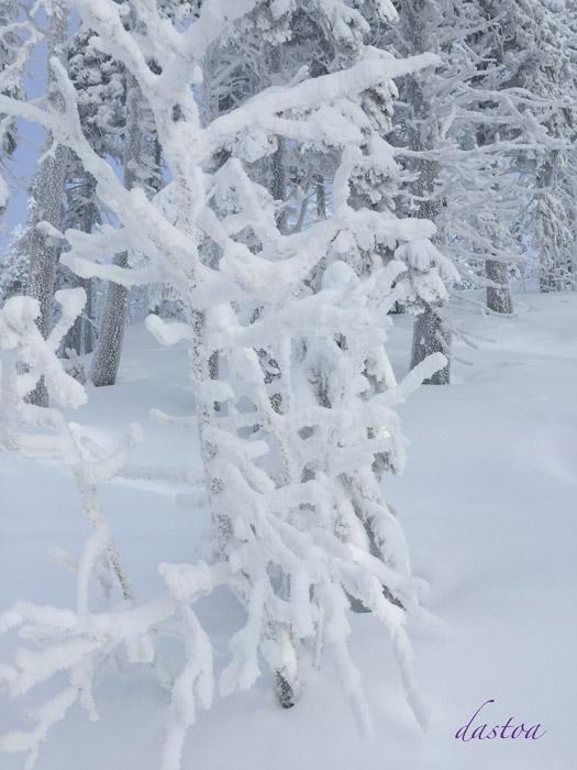 Schneeschuhwandern im Bayerischen Wald