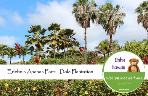 Ananas Farm - Dole Plantation