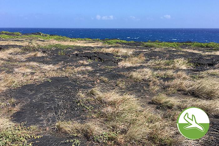 Hawai'i Volcanoes National Park mit Kindern - Lavafelder soweit das Auge reicht