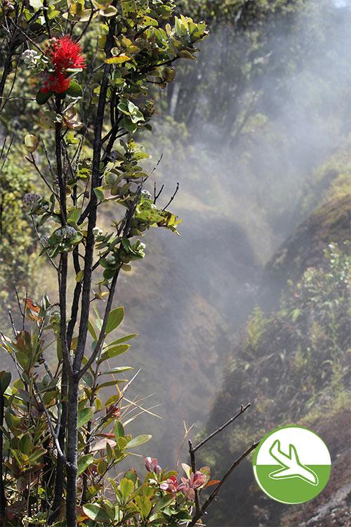 Hawai'i Volcanoes National Park - Schwefeldampf aus der Tiefe