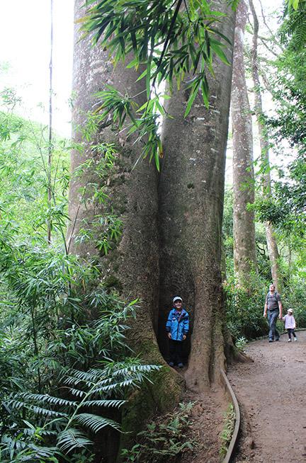 Auf den Weg zu den Manoa Falls gibt es immer wieder schöne Ecken zum Verstecken.