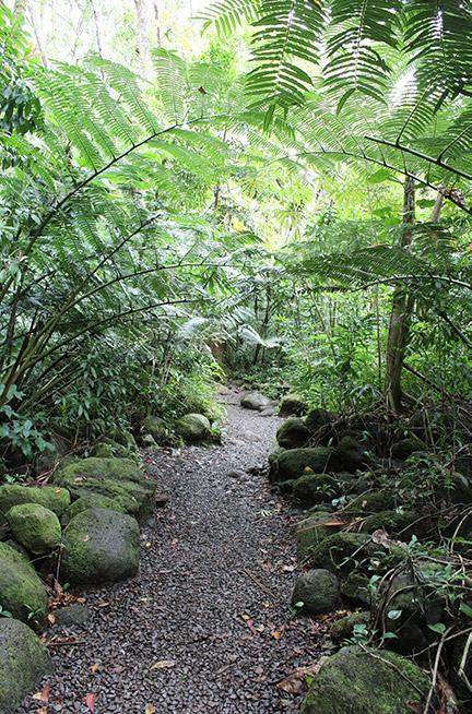 Ein wunderschöner Weg, gesäumt von Urwald-Natur.
